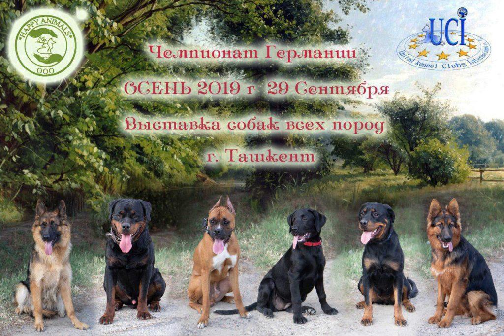выставка собак в Ташкенте